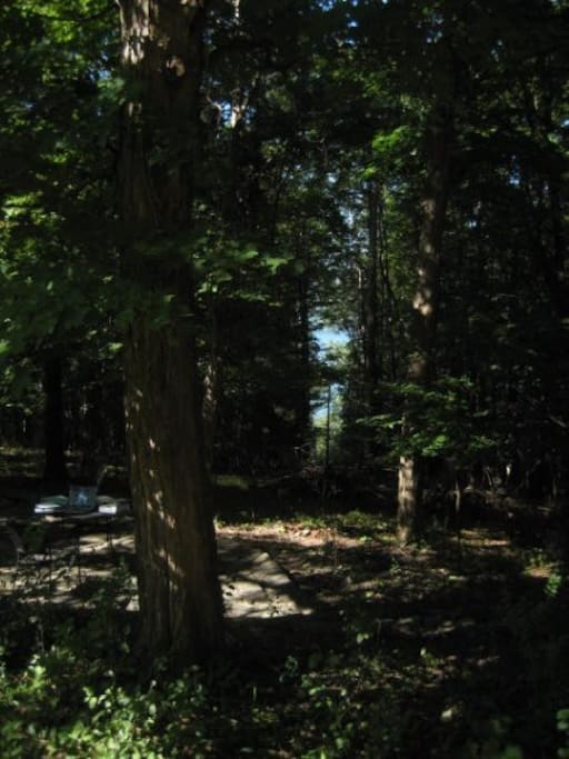 View of backyard woods