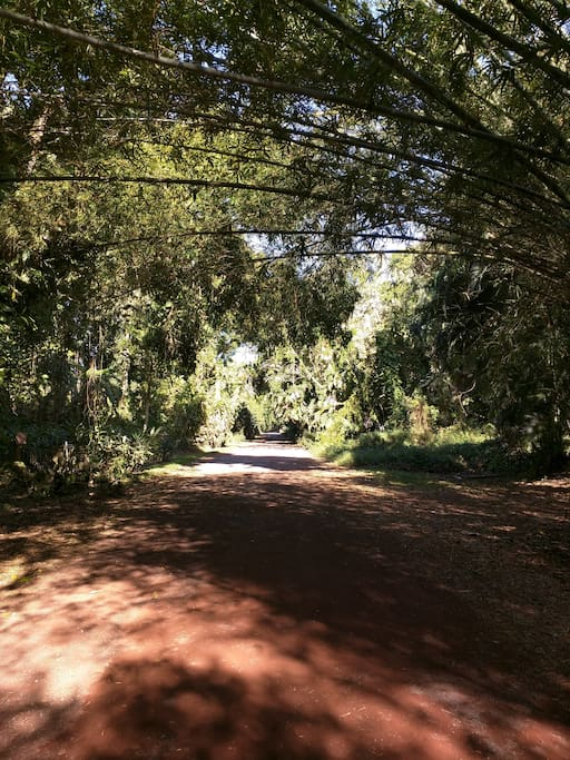 Papaya Farms Road is great for morning exercise!  Off the grid and non-GMO farming community.  There is an organic farm across the road with local produce for sale.  Steve and Janelle own and run Hawiian Retreat, and will be your hosts. <3