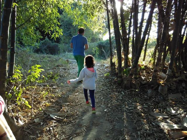 Sugarcane Trails