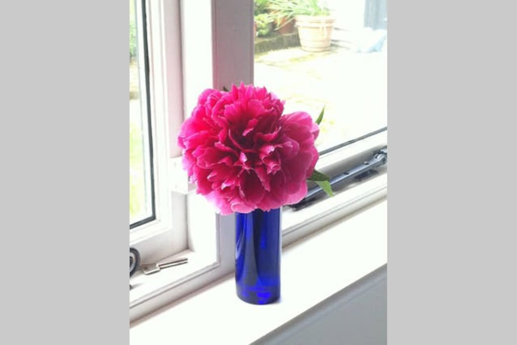 Freshly-cut flowers always! Peony from our extensive garden.