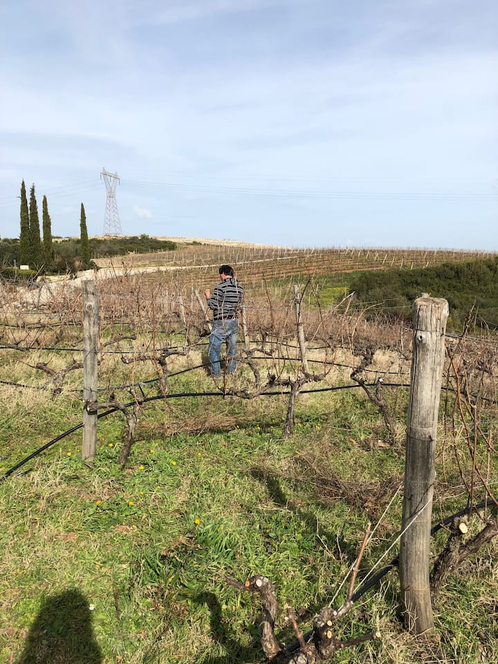 Learning about wine production