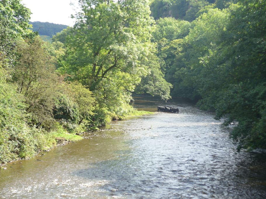 River on the way to Cromford