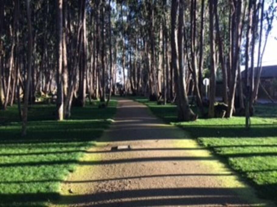 Paseos por el bosque
