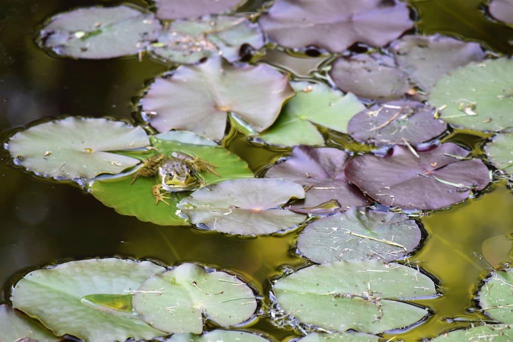 Charming Frog Pond