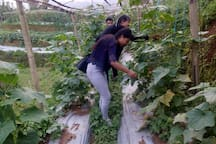 Subharambha organic farm and homestay