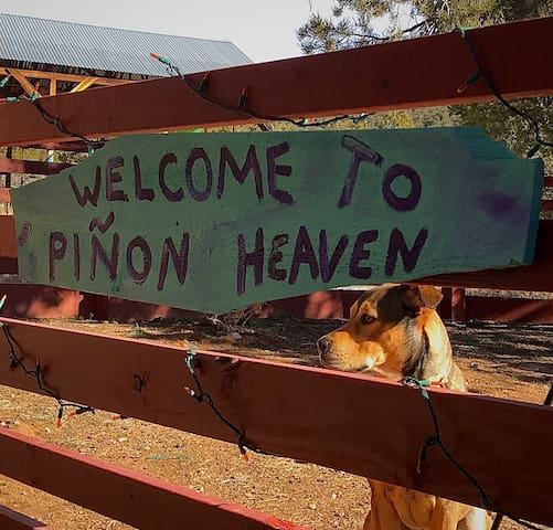 Pet Friendly Piñon Heaven
