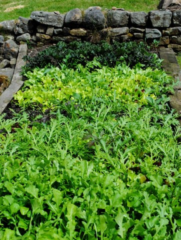 Herbs, lettuce and fruits grown in the garden