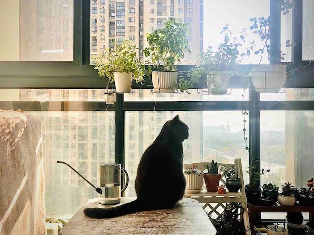 【有猫匿】带阳台小居室;近奥体、国博中心;地铁七站到西湖高铁站;机场打车半小时;提供早餐、自行车
