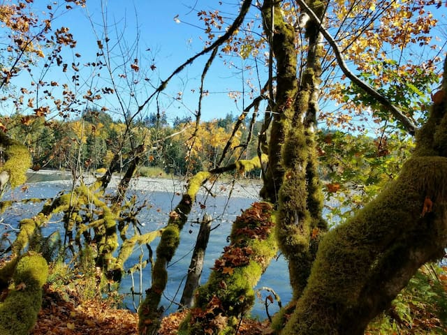 Elwha River Campsite