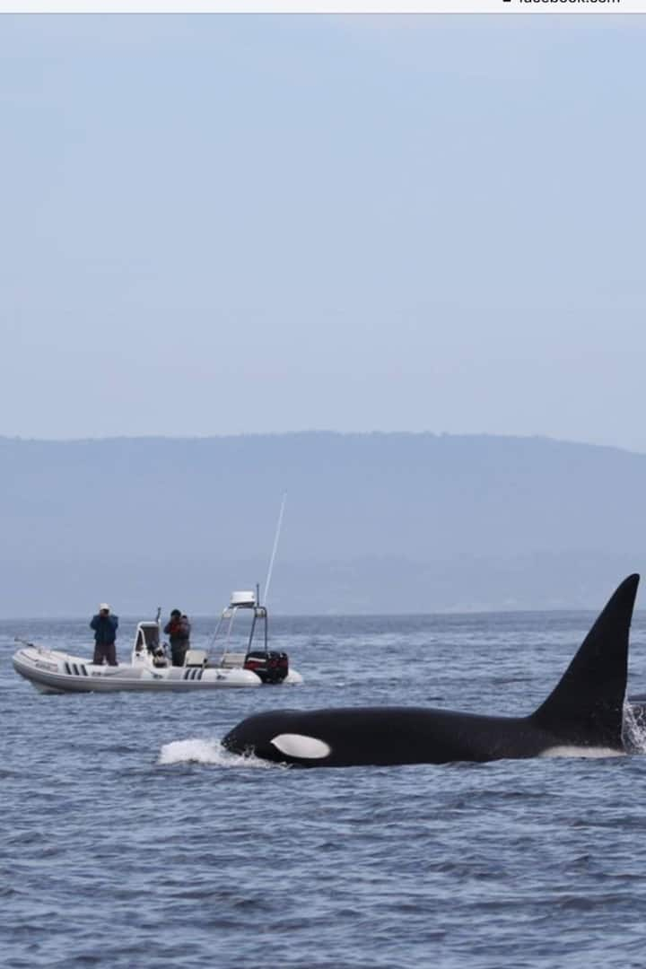 Us and the Killer Whales in Monterey Bay