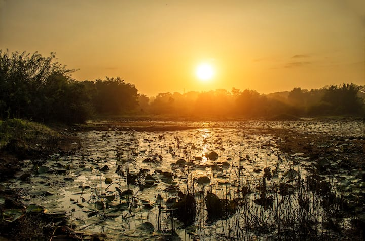 The Elephant Path - A lake in front and wild life