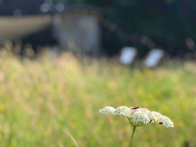 Shepherd hut & wood-fired hot tub in flower meadow