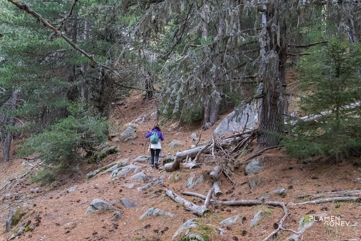There are many eco trails in century-old forests