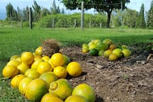 Abundance fo fruit from the land