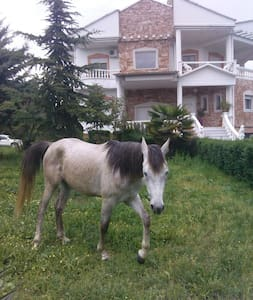 FIRST VIEW VILLA WITH GARDEN FOR PETS - Karditsa