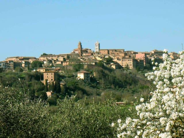 Very close to Siena, organic farm the countryside - Siena - Apartment