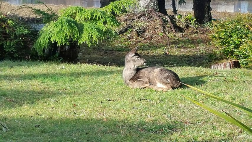 This sweet little doe came and sat in the yard for a bit.