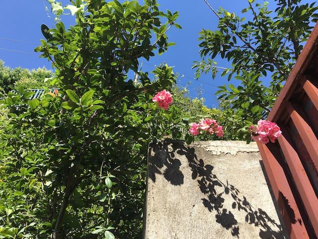 攀枝花阿拉善太阳谷