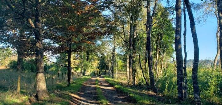 Camino Villarrica Freire a orillas del río Toltén