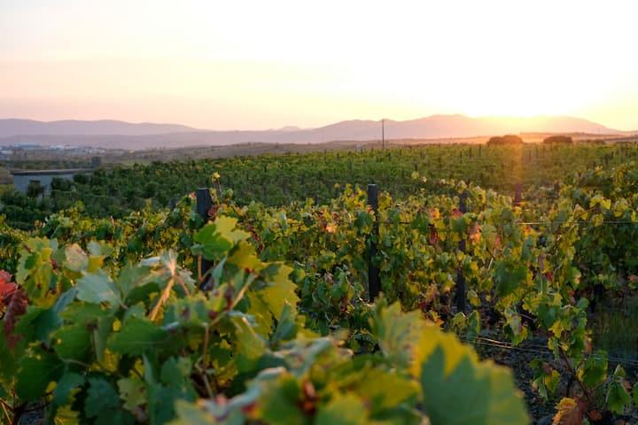 Douro Valley Wine Farm