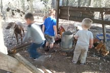 The chicken house is a place youngsters enjoy...