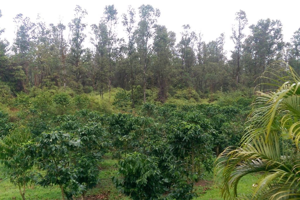 Coffee farm view from guest house