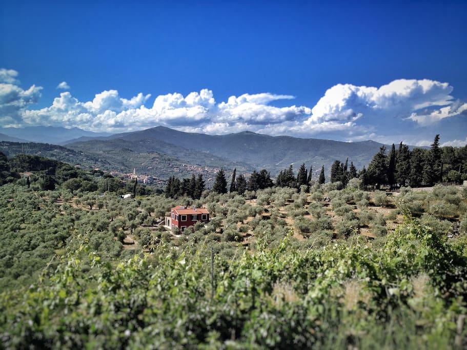 Casa Novaro immersa nell'oliveto