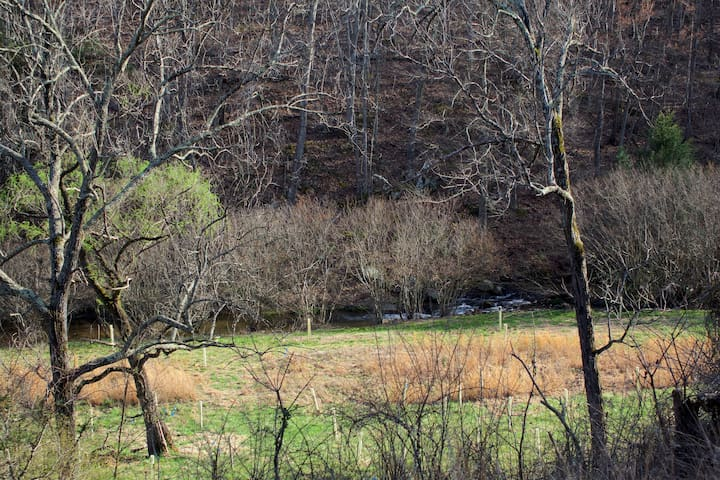 View of Davis Creek from back deck