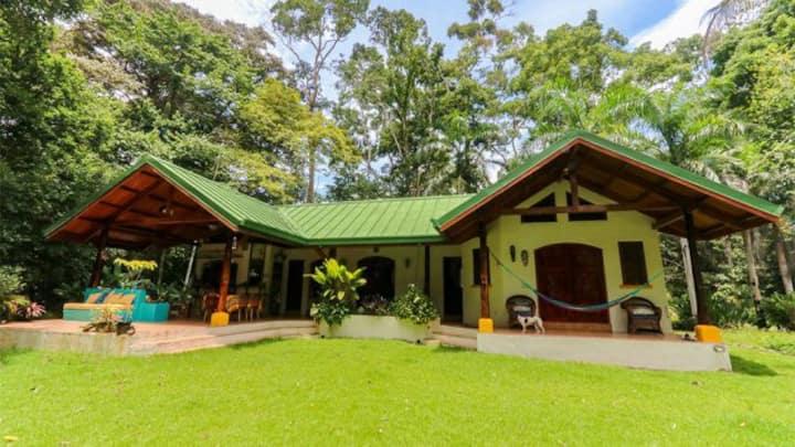 Monkeys n  Mangos Beach Jungle Casa Osa Peninsula