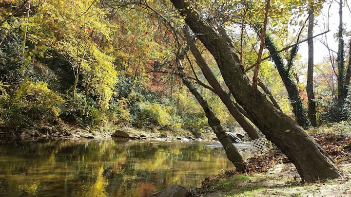 Asheville Mountain Home ON RIVER! Rooms for Rent.