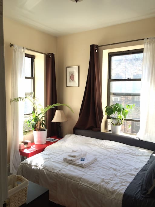 Your super sunny corner bedroom with lots of plants and a comfortable bed awaits you!