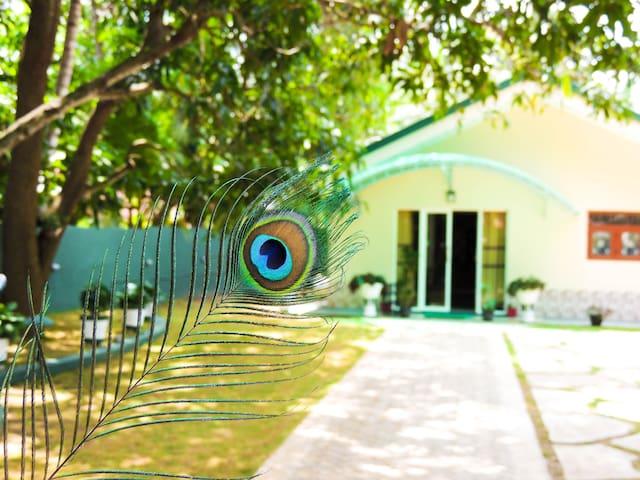 All Rooms- Shaa Lodge [Yala]