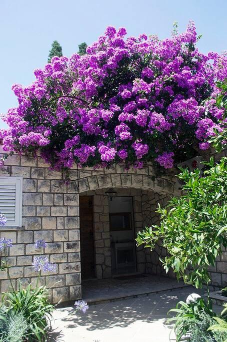 Flowers around main entrance