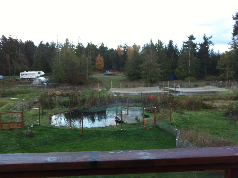 From the deck you can enjoy the scenery overlooking the trout ponds. Many birds including Eagles, King fishers, herons and ducks. We have two new families of ducks on the property and a new addition to our beaver family.