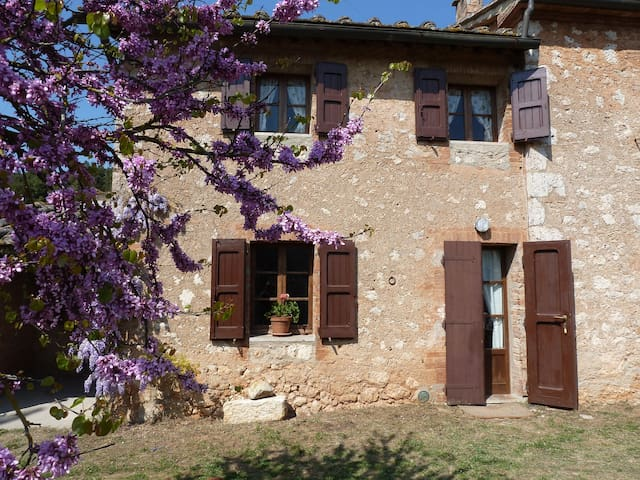 Apartment with pool near Siena - Sovicille - Apartament