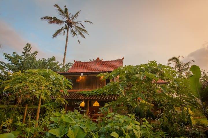 Hati Suci: Brahma House