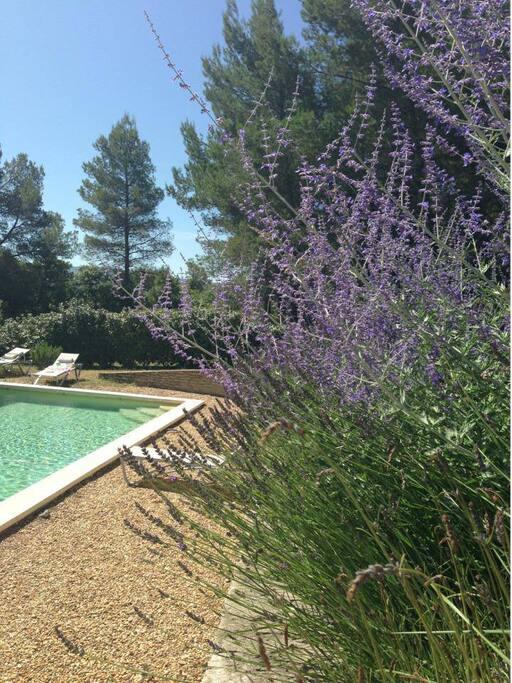 La piscine depuis la terrasse