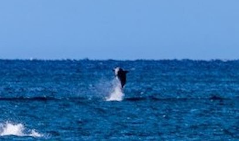 Dolphins off the beach