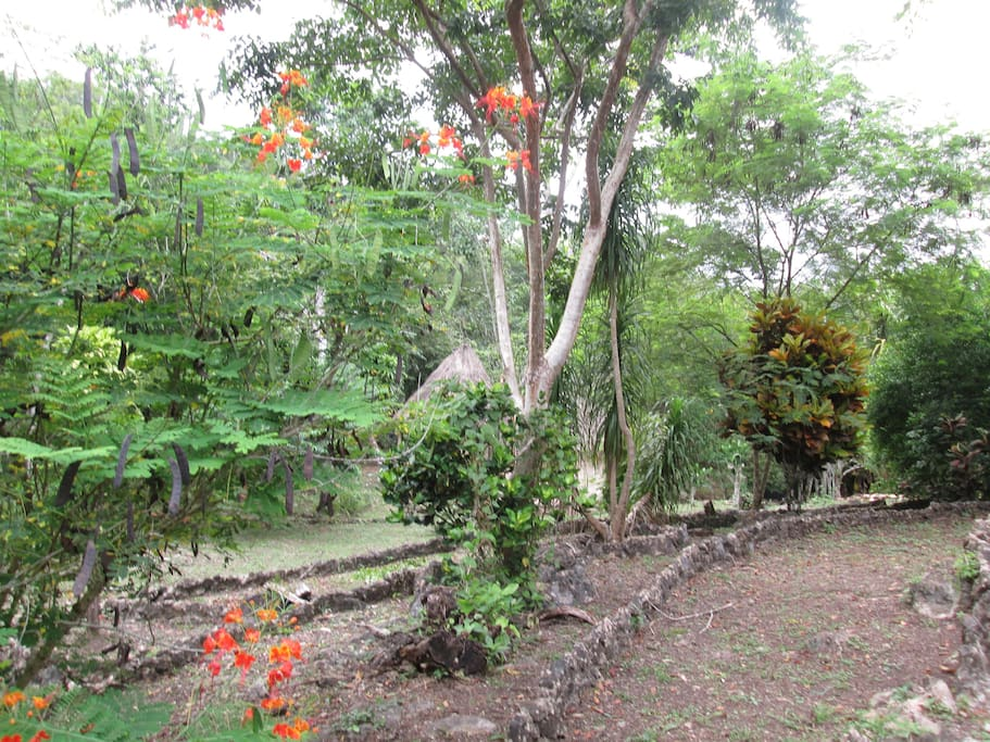 80 acre rainforest reserve - tropical flowers, tropical fruit, wildlife, birds