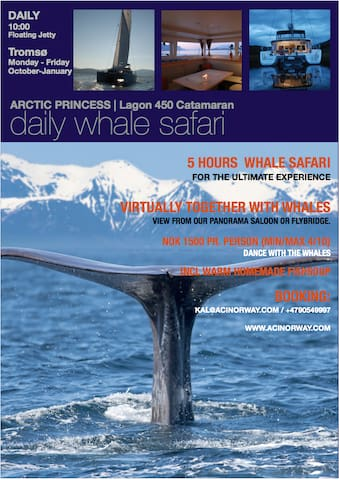 Our partner: Arctic Cruise in Norway