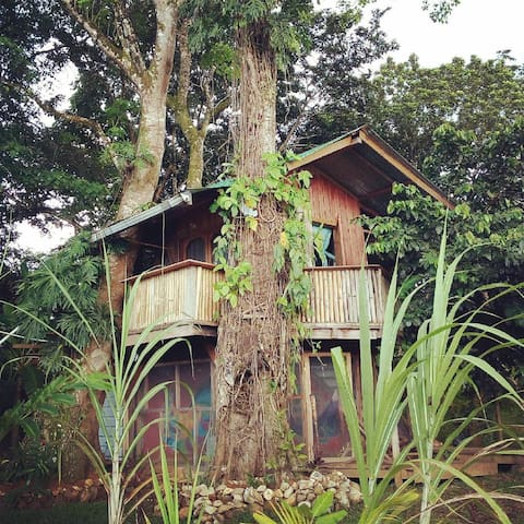 Whimsical Treehouse in Dolphin Bay on Cacao Farm
