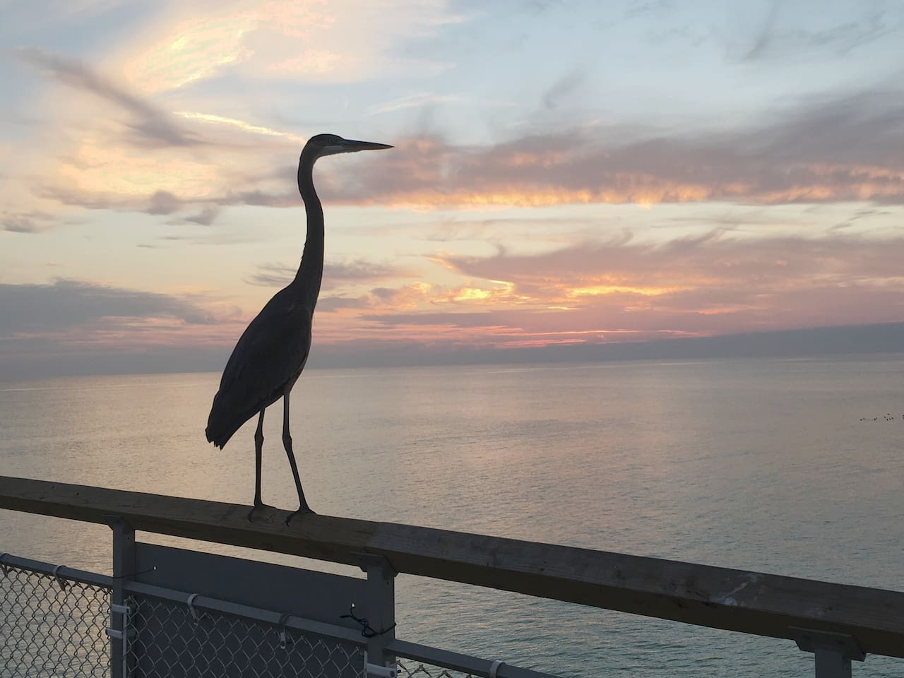 Heron Enjoying Sandpiper Sunset