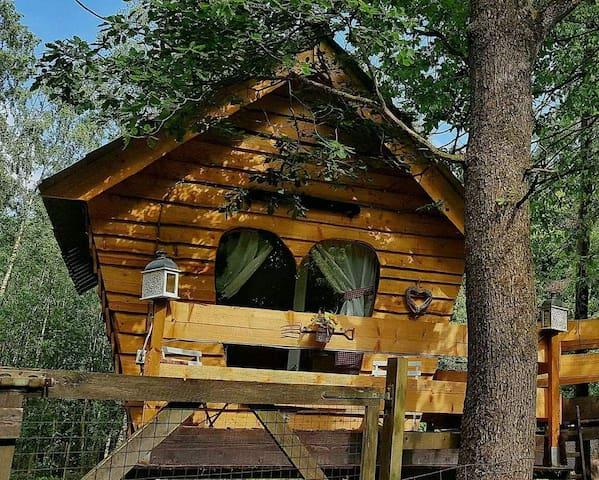 Nid d'amour perché en forêt Intime et Luxueux