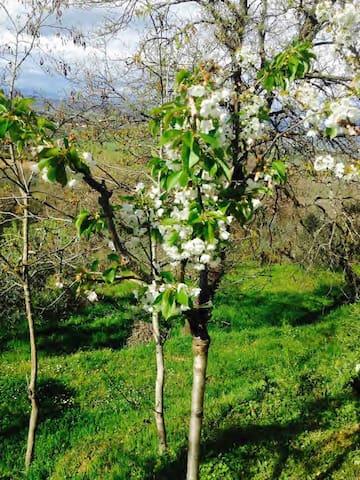 Un paradiso vicino alla storia - Incisa in Val d'Arno - วิลล่า