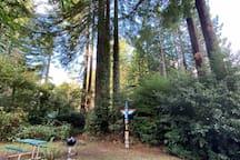 Cornhole, totem pole and Weber bbq in n backyard