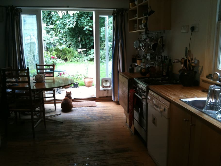 Kitchen opening onto the garden (with cat!)