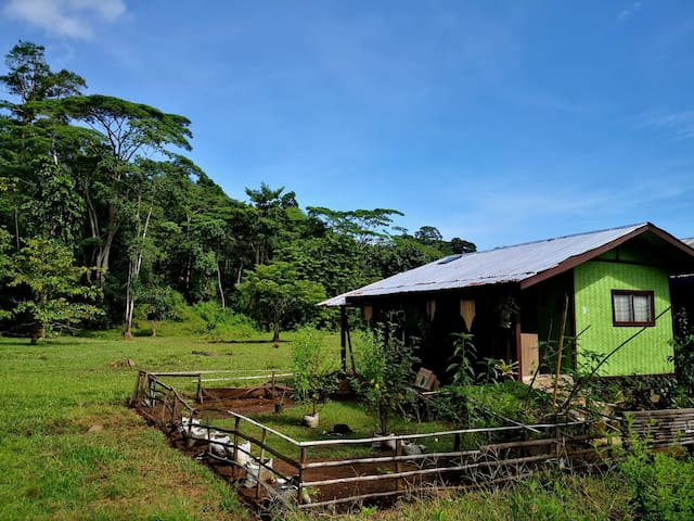Simple Filipino Hut in a Rice Field Near Forest