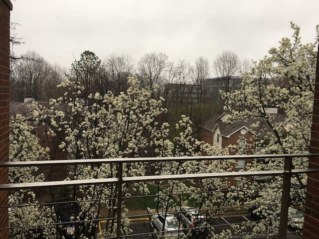 Upscale Area, Private Room, Walk to Metro, Near DC - Tysons - Apartment