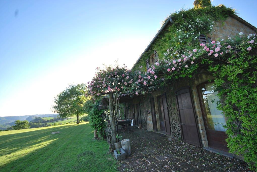 Casa da est. Fioritura delle rose