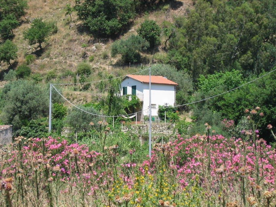 Casakiwi set in the landscape